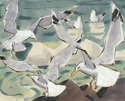 Gulls of Maine