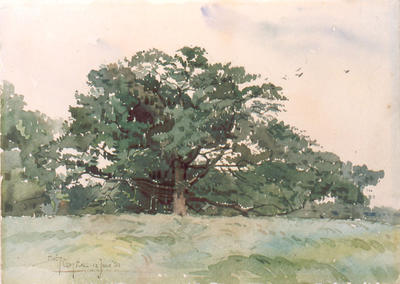 Study of Old Oak