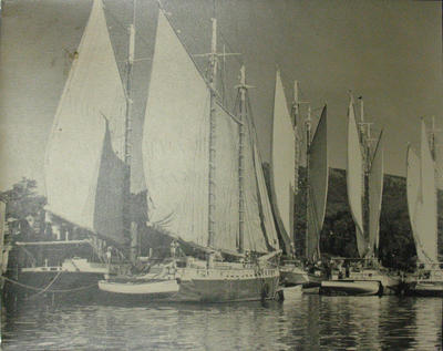 View of Schooners in Camden Harbor