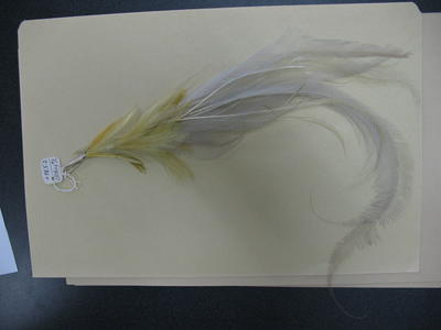 Bird of Paradise feather accessory for hat or clothing