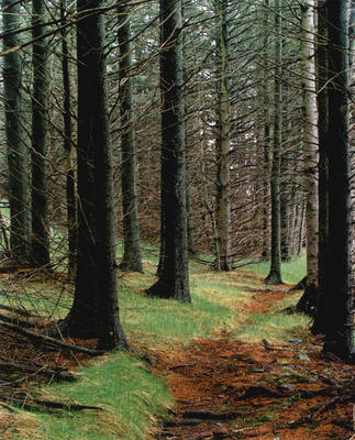 "Path in Wood, Great Spruce Head Island, Maine, 1981 from ""In Wildness"" Portfolio"