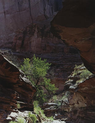 "Coyote Gulch, Escalante River, August 17, 1971 from ""Glen Canyon"" Portfolio"