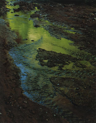 "Green Reflections in Stream, Moqui Creek, Glen Canyon, September 2, 1962 from ""Glen Canyon"" Portfolio"
