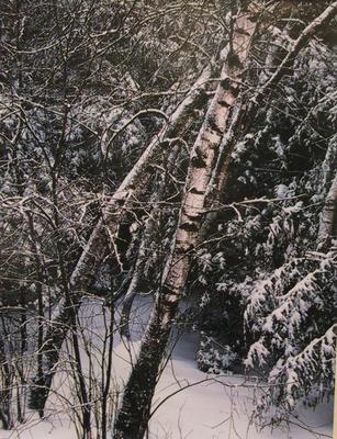 Untitled - Maine Landscape