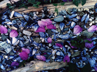 Rose Petals on the Beach, Driftwood Beach, Great Spruce Head Island