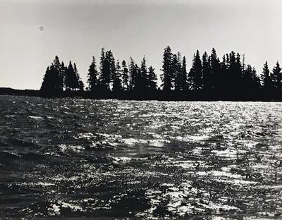 Island Spruce