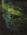 "Green Reflections in Stream, Moqui Creek, Glen Canyon, September 2, 1962 from ""Glen Canyon"" Portfolio"
