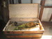 Wooden Flat Top Steamer Trunk with Cloth Lined Argyle Pattern Interior