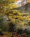 "Maple Sapling and Rock, Passaconaway, New Hampshire, 1953 from ""In Wildness"" Portfolio"
